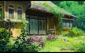 home, Plants, leaves, greens, cat
