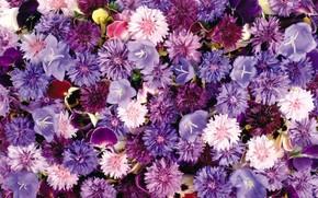 Flower carpet, cornflowers, Bells, violet