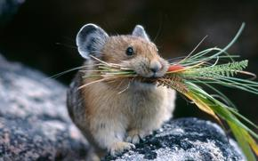 mouse, Mouse, grass, situation, nature
