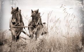 кони, поле, повозка, фон, стиль
