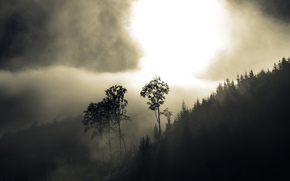 fog, forest, Trees, Hills, haze
