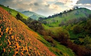 estate, paesaggio, Hills, fiori, cielo, natura, estate