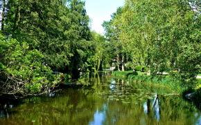 лето, деревья, зелень, река, вода