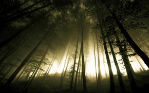 forest, Trees, trunks, hillock, hill, light