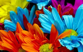 flores de colores brillantes, gotas de agua, naranja, rojo, prpura