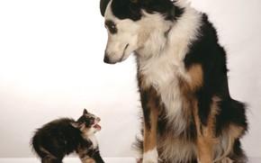 dog, kitten, fright