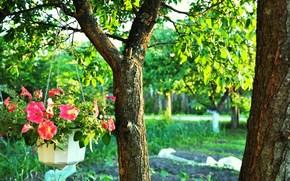 Дерево, Деревья, Горшок с Цветами, Зелень, Яркие Краски, Цветы, Цепочка, Ствол, Ветки, Ветви, Листья, Листва
