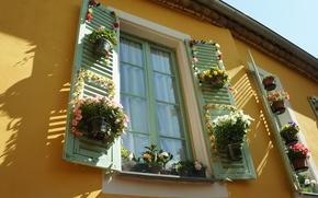 Flores, Pots, janela
