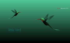 little bird, Humming-bird, birdie, a little bird, Birds, style, vector, flight, tenderness