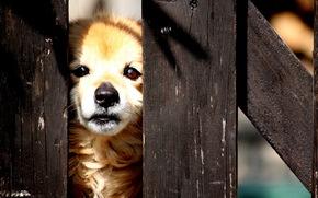 собака, забор, улица