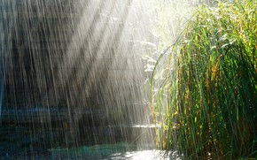 дождь, ливень, вода, струи, трава, растения, зелень, свежесть