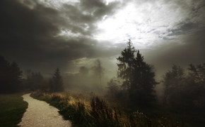 fog, Track, footpath, forest, clouds, Trees, grass