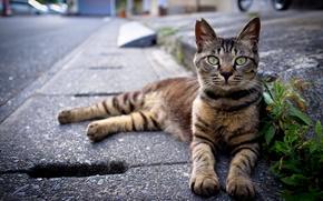 gatto, gatto, strada, strada