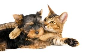 cat, cat, dog, terrier, are