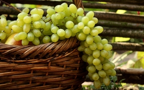 grapes, white, clusters, pears, basket