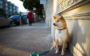 собака, улица, друг