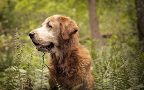 cane, foresta, natura