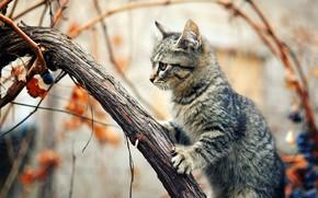 кошка, кот, дерево, сидя, лиана, виноград, осень, внимание