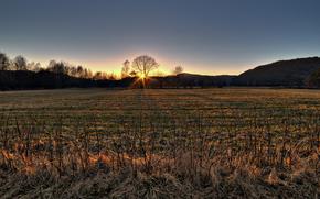 осень, трава, сухая, дерево, ветви, солнце, закат, холмы