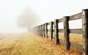 arbre, solitaire, back-end, brouillard, Brume, matin, clture, herbe