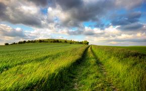 дорога, след, поле, травы, зелень, равнина, простор, даль, лето, радость, день, солнце, небо, облака