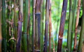 bamboo, nature, macro