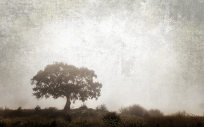 природа, дерево, кусты, трава, обработка