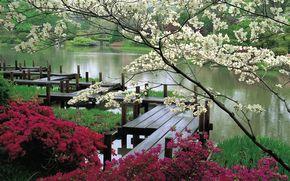 jardn, Japn, primavera, florecer, puente, estanque, belleza