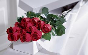 Flowers, gift, Rose