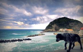sea, ocean, surf, dog, dog, wind, mountain, rock, city, wharf, sky