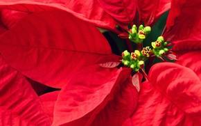 花卉, 叶子, 红色