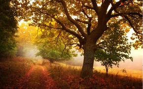 autumn, forest, Trees, sun, foliage, footpath