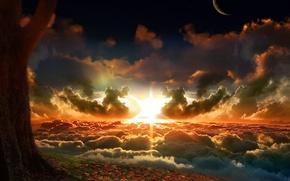 природа, дерево, облака, вершина