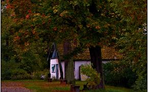 осень, деревья, листья, золотая, рай, мечты, уголок