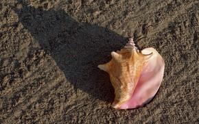 ракушка, песок, пляж