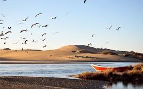 acqua, barca, fiume, dune, sabbia, secca, Uccelli