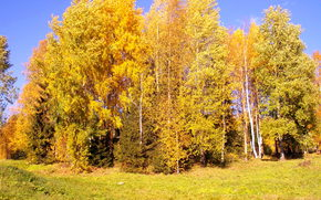 paesaggi, autunno, sole, alberi, vento, Abete, Betulla, erba, blu