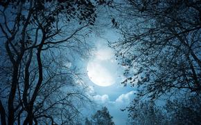 Wald, Mond, Bume