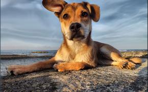 солёный пёс, море, друг