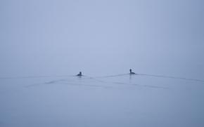 lake, Ducks, fog, minimalism