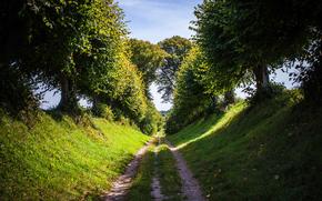性质, 夏天, 道路, 树, 草, 天空