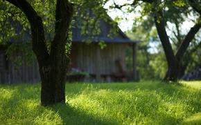 jardin, arbres, herbe