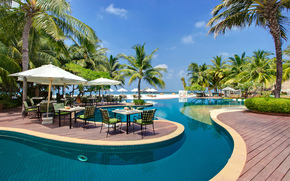 Maldives, Table, pool, Sunbeds, Palms, Trees, nature