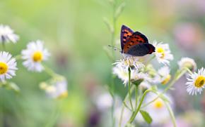 butterfly, Flowers, rozmytost