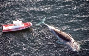 кит, лодка, океан