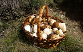 Green, grass, forest, complete, basket, basket, mushrooms, food