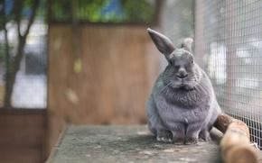 rabbit, mordashka, in a cage, Ushastik