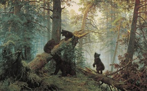 Morning, Bears, forest, fallen tree