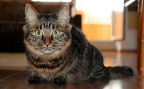 gatto, close-up