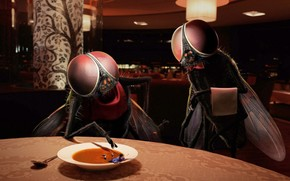 restaurant, fly, soup, man, humor